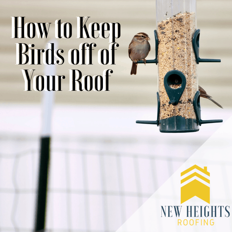 How to Keep Birds off of Your Roof